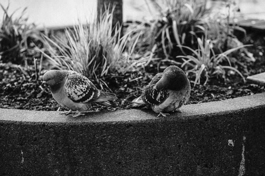 Abstand siegen Corona Fotograf Streetphotography